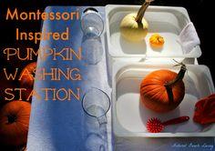 Pumpkin Washing Station
