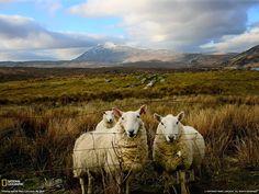 Free Scottish Wallpaper | Scotland Wallpaper National Geographic Photo - Free Download Wallpaper ...