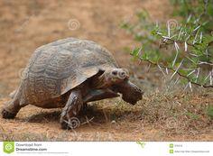 bwegende wilde dieren - Google zoeken