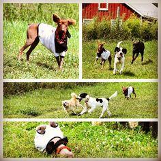 More fun from Ches'ka & her furry friends! #evasplaypupspa #doggievacays #dogsinnature #dogdaysofsummer #dogsofinstagram #hairlessdog #adoptdontshop #endlessmountains #mountpleasant