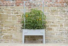 fruit on pinterest raised planter garden living and tomato garden