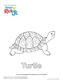 Box Turtle Coloring Page   coloring book entry for the ...