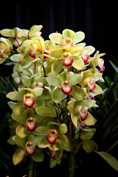 https://flic.kr/p/aa4nn | 2006 pacific orchid exposition