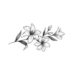 Lilly Flower Tattoo, Jasmine Flower Tattoos, Lillies Tattoo, Flower Tattoo Drawings, Lilly Flower Drawing, Small Flower Drawings, Gladiolus Tattoo, Girl Flower Tattoos, Little Flower Tattoos