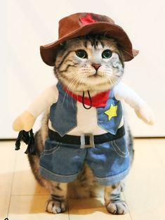 This is a collection of Halloween pet costumes. pet dresses Cat Clothes Costume Sex Nurse Suit Clothing For Halloween Costume. Cute Cat Costumes, Pet Halloween Costumes, Pet Costumes, Halloween Kostüm, Kittens In Costumes, Cute Funny Animals, Funny Animal Pictures, Cute Baby Animals, Cute Cats