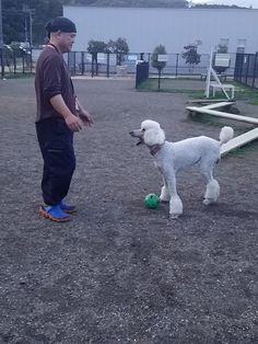 Play with me! 3.8 2016『ホワイトシェパード・アイルと遊ぶ!・新大名古屋ビルヂングへ』
