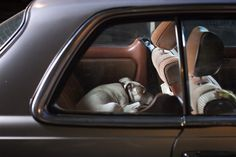 """Great photo series titled """"Dogs In Cars"""" by Martin Usborne…"""