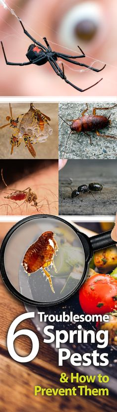 These are great tips for keeping these pests out of your home! I've always done a perimeter treatment but I didn't know there was more that I could do. #springcleaning Garden Insects, Garden Pests, Home Security Tips, How To Protect Yourself, Home Health, Lawn Care, Outdoor Projects, Pest Control, Spring Cleaning