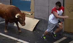 san firmino pamplona - Cerca con Google Pamplona, Cow, Google, Animals, Animales, Animaux, Cattle, Animal, Animais