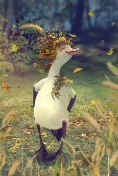 Mr Goose by Svezhaya.deviantart.com on @DeviantArt