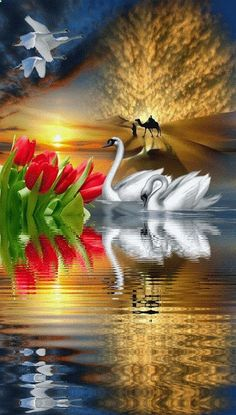 Full DIY diamond painting mosaic landscape rhinestone cross stitch diamond embroidery needlework swan lovers and Tulip flower Beautiful Swan, Beautiful Birds, Beautiful Images, Gif Pictures, Pretty Pictures, Gif Bonito, Water Reflections, Belle Photo, Beautiful Landscapes