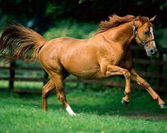 .quiero correr caballo