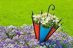 Ogród, Bratki, Parasolka, Trawa