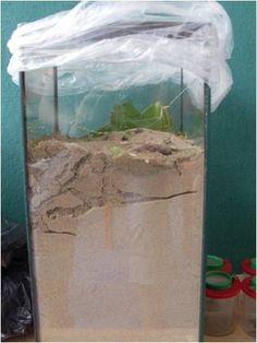Mierenbak maken