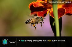 #bee #insects #facts