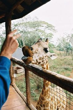 The Giraffe Centre, Langata, Nairobi, Kenya. Visited this place a couple of time and got head butt by a giraffe because I wasn't feeding her.