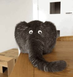 Share this Cat butt or elephant Animated GIF with everyone. Gif4Share is best source of Funny GIFs, Cats GIFs, Reactions GIFs to Share on social networks and chat.