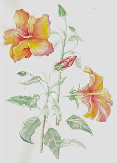 watercolor tulipa by JettieHier.deviantart.com on @DeviantArt
