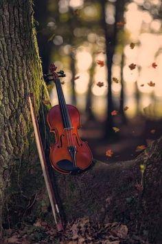 """Autumn song by Andrea Carretta "" Studio Background Images, Dslr Background Images, Photo Background Images, Photo Backgrounds, Violin Photography, Amazing Photography, Autumn Photography, Life Photography, Fall Wallpaper"