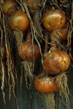 onions - the basis for so many inexpensive, comforting foods