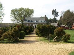 """The English boxwoods at Gunston Hall are belived to have been planted between 1755 and 1765. (From Washington Post's """"Can't Miss Gardens,"""" 4/20/12)"""