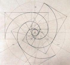 Fibonacci Spirals Rafael Araujo (www.rafael-araujo.com):