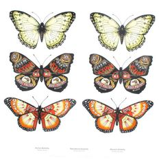 Art print features three butterfly species, Anchor Butterfly (Papilio ancora), Red Admiral Butterfly (Vanessa gonerilla) and Monarch Butterfly (Danaus plexippus). Butterfly Species, Monarch Butterfly, New Zealand Art, Kiwiana, Butterfly Painting, New Print, Print Store, Limited Edition Prints, Printmaking
