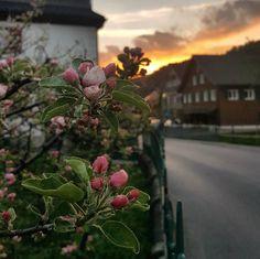 Romantische Auszeit im Kuschelhotel Gams Hotels, Das Hotel, Plants, Gap Year, Flora, Plant
