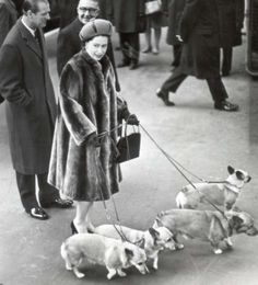 the queen & her corgi's