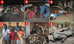 Dramatic moment a notorious gang of ivory poachers are caught
