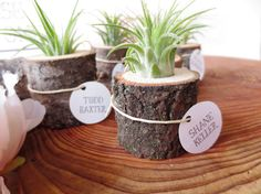 Tree Stump Planter: This gorgeous planter ($6) is crafted from a tree stump made from fallen trees and has a Tillandsia air plant living in it.