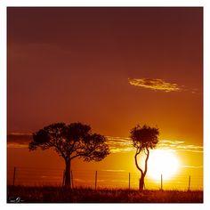 Morning Glory II by mdomaradzki.deviantart.com