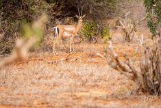 Où dormir dans le parc national Kruger ? - My Wildlife Parc National Kruger, Safari, Dan, Wildlife, Animals, Animales, Animaux, Animal, Animais