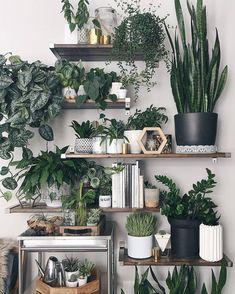 Indoor plants, living wall