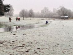 Horses on Chawton House's grounds