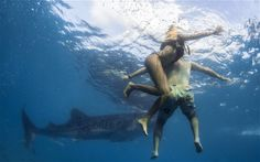 Tourist notes: What It's Like to Punch a Shark