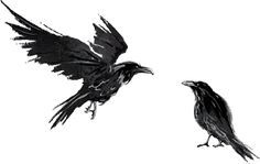 huginn and muninn - Google Search