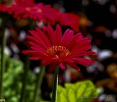 Paisagem Natural/bela Plants, Natural Landscaping, Belle, Paisajes, Fotografia, Plant, Planets