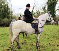 Blue Joey hunting Dec 2019. #loveirishhorses #horsesinireland #horseforsale Horses For Sale, Cob, Brave, Irish, Hunting, Animals, Animales, Irish Language, Animaux