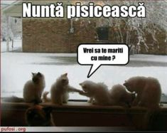Funny Moments, Cute Cats, Jokes, Lol, In This Moment, Humor, Wattpad, Sweet, Happy