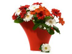 Giftblooms offers best flower arrangements for delivery in Germany. Save money by sending flower bouquets directly with a trusted local florist. Online Florist, Local Florist, Christmas Flowers, Christmas Gifts, Send Flowers Online, Fresh Flower Delivery, Flowers For You, Christmas Delivery, Flower Arrangements