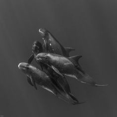 Image result for Jean-Marie Ghislain Whale, Sci Fi, Ocean, Whales, Science Fiction, The Ocean, Sea