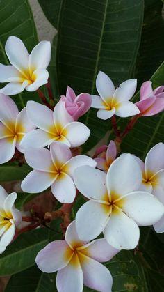 Reminds me of Hawaii Flowers Nature, Exotic Flowers, Tropical Flowers, Beautiful Flowers, Flower Wallpaper, Wallpaper Backgrounds, Iphone Wallpaper, Flower Aesthetic, Ikebana