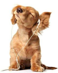 dog, music, and puppy afbeelding