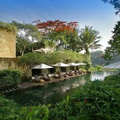 Maya Ubud Resort & Spa, Ubud, Bali  Guus: been there in 2007, totally loved the resort...Spa at Maya Ubud is highly recommended!