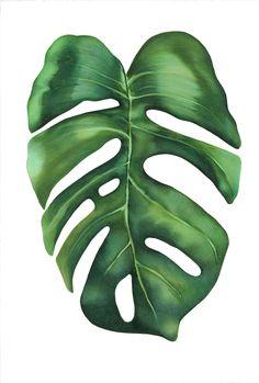 """Monstera"" Colored Pencil drawing by Hannah Sarfraz Plant Painting, Plant Art, Tropical Art, Tropical Leaves, Watercolor Flowers, Watercolor Paintings, Color Pencil Art, Plant Wallpaper, Leaf Art"