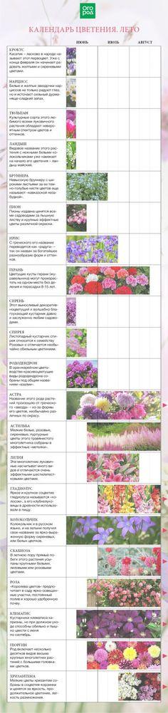 цветочный календарь на лето