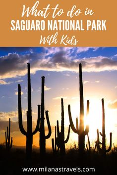 Heading to Saguaro National Park with kids? Read on for tips on how to make your trip to the desert a success!