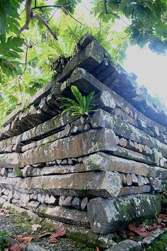 Unique megaliths of Nan Madol at island Pohnpei,Micronesia. Ancient Mysteries, Ancient Ruins, Ancient History, Coral Castle, Wake Island, Federated States Of Micronesia, Mysterious Places, Holiday Places, Easter Island