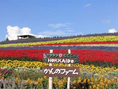 Ultimate Guide To The 8 Flower Fields You Need To Visit In Hokkaido - Blog | OneThreeOneFour